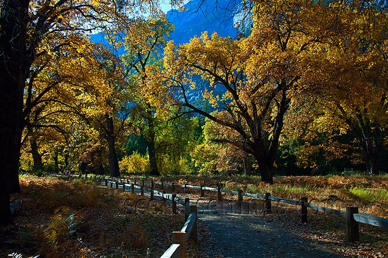 """Autumn Path"" Taken on a trail run along the north side of Cook's Meadow in Yosemite Valley."