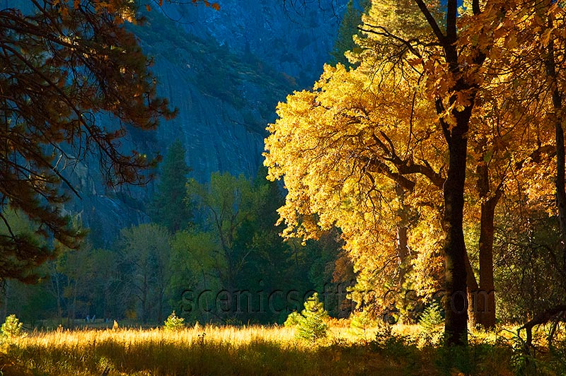 """""""Autumn Tree"""" This stand of trees is just west of Cook's Meadow."""