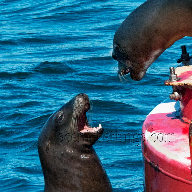 """""""Oh Buoy"""" Taken in Santa Cruz Harbor."""