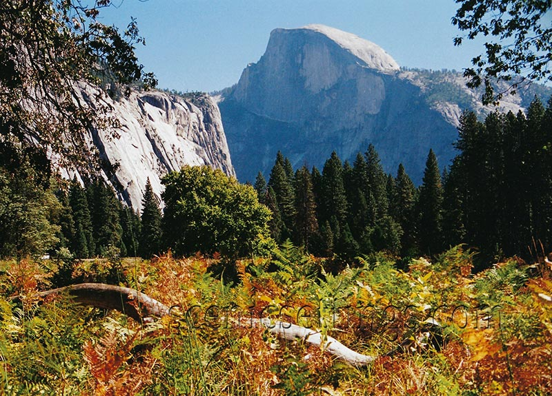 Half Dome from Mid Meadow
