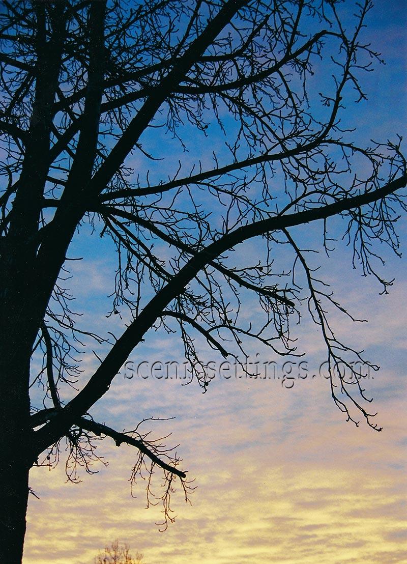 Rialto Sunrise